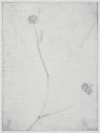Buttercup (detail)