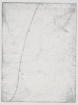 Speedwell (detail)