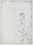 Viper's Bugloss (detail)