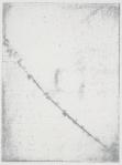 Whtie Melilot (detail)