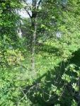 Heygate Trees 10