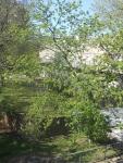 Heygate Trees 14