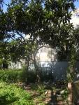 Heygate Trees 6