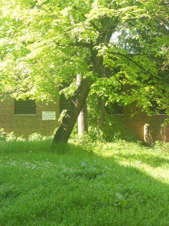 Heygate Trees 9