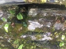 Fern garden 2