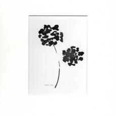 Garden flowers 6